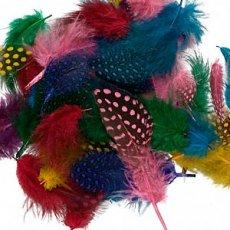 Feathers & Pom Poms